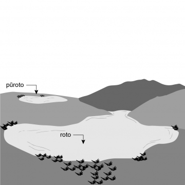 Drawing of a lake with plants around it and a small hill behind it. Also pictured is a small pond.