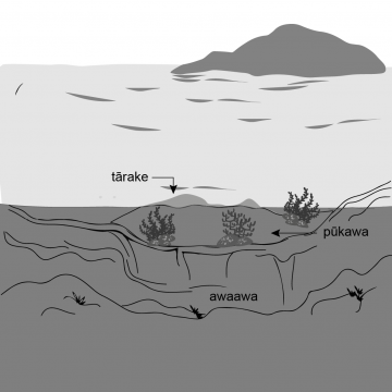 Drawing of a water line. Underneath the water there is a trough in the seafloor with a bank above it.