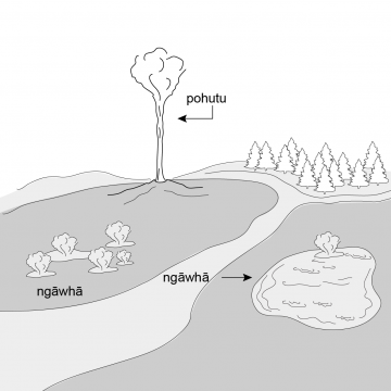 Drawing of small pond with rising steam, steam vents and a geyser.